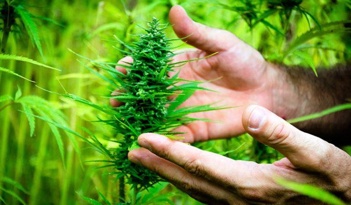 debestecbd beste cbd drogist kopen discreet veilig biologisch
